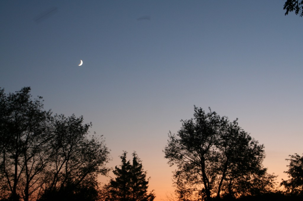 moon, sunset, silhouette