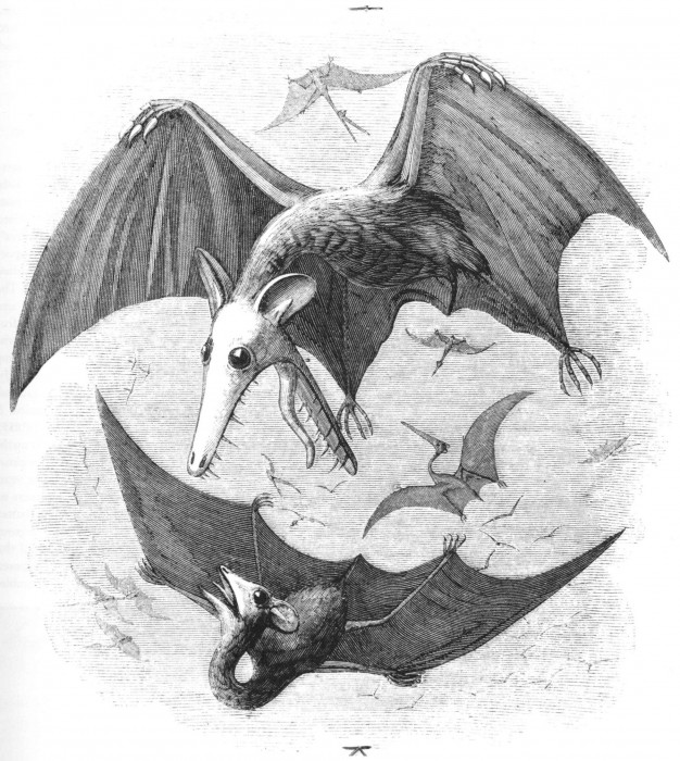 Pterodactyl_reconstruction_Newman_1843